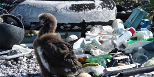 The blight of plastic waste… The Travel Corporation takes a stand