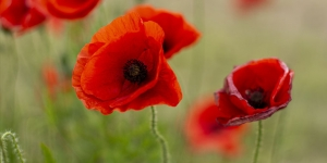 ANZAC Day deferral options
